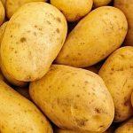 фото картошки ветеран