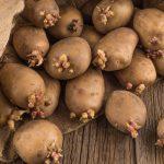 сколько нужно сажать картошки