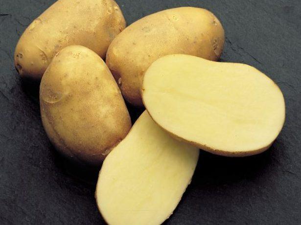 фото сорта картофеля веснянка