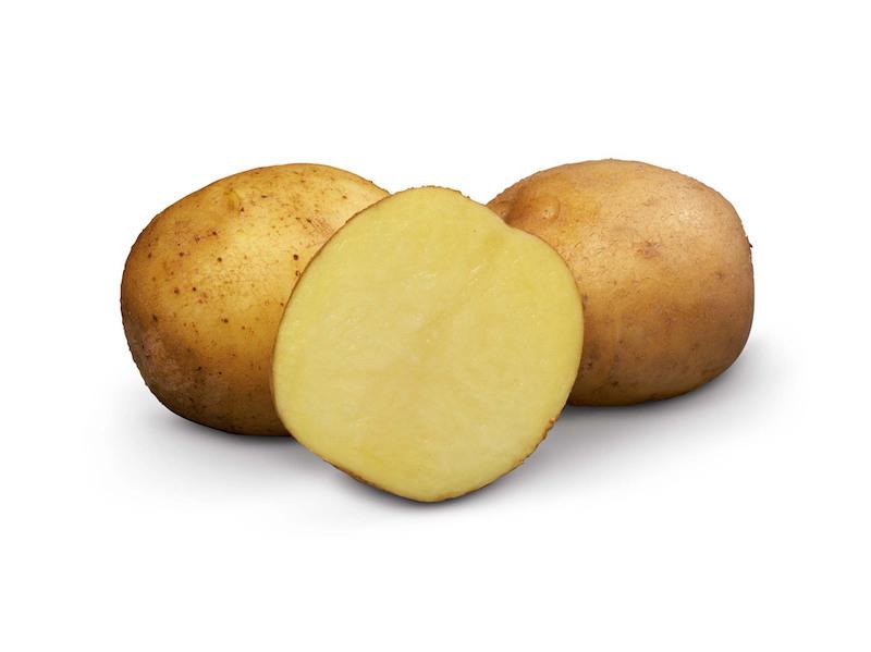 фото сорта картофеля вр 808