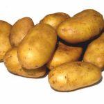 фото вершининской картошки