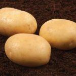 фото картошки голубка