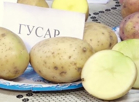 фото картошки гусар