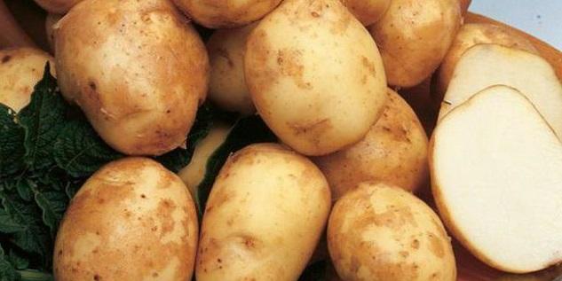 фото сорта картофеля голубка