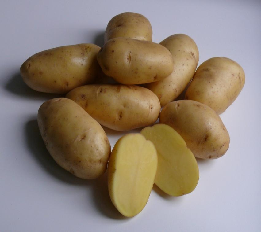 фото сорта картофеля вулкан