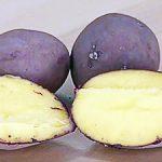 фото донецкой картошки