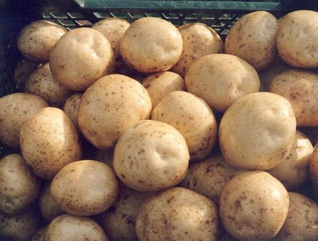 фото сорта картофеля десница