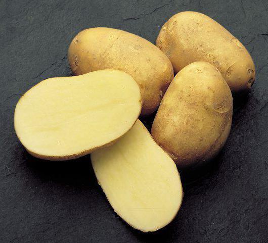 фото сорта картофеля Дина