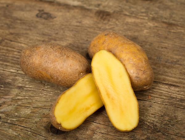 фото сорта картофеля Дитта