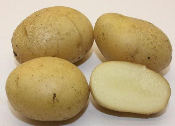 фото сорта картофеля диво