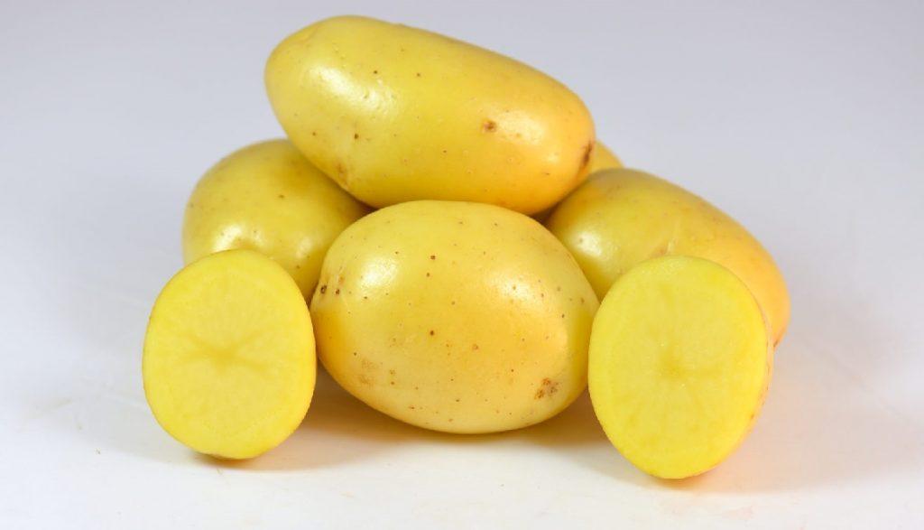 фото сорта картофеля Джоконда