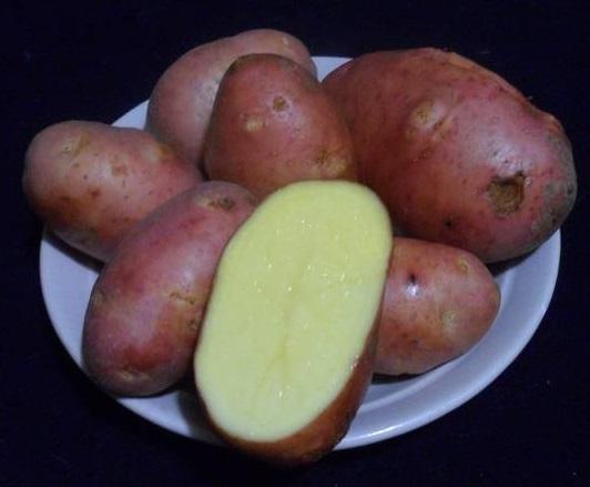 фото сорта картофеля Евразия