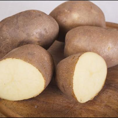 фото сорта картофеля Ипатовский