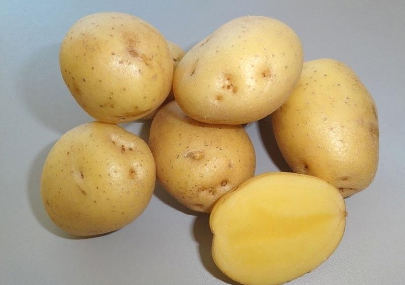 фото сорта картофеля Казачок