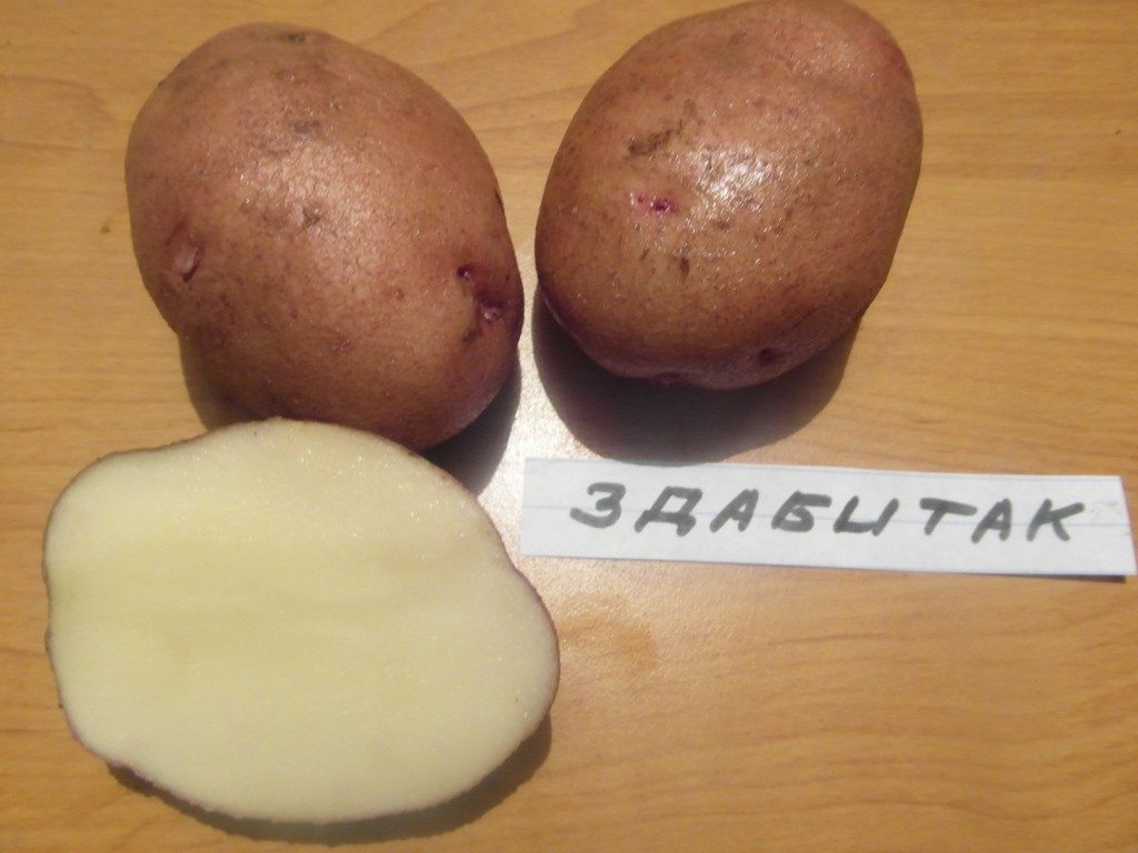 фото сорта картофеля Здабытак