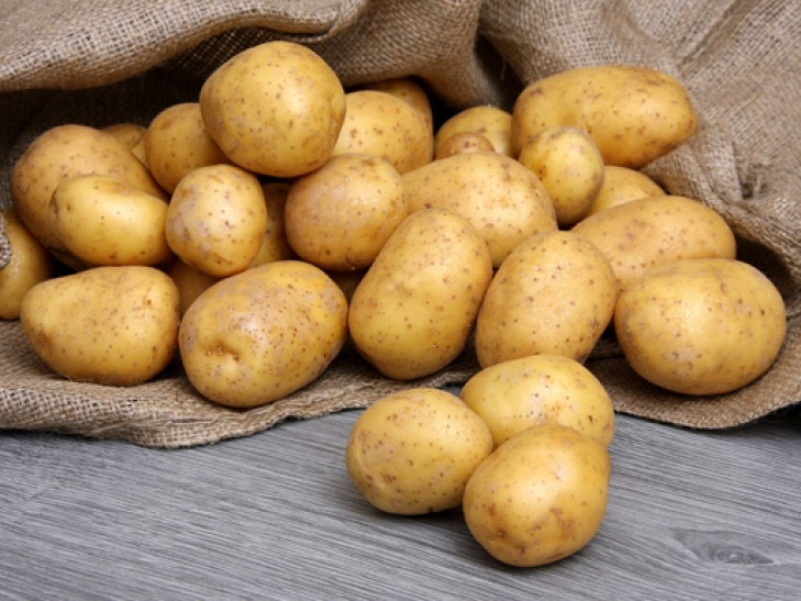 фото сорта картофеля Зырянец