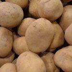 фото картошки Камчатка