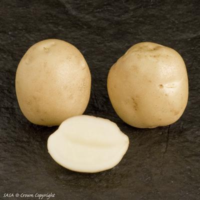 фото сорта картофеля Карлингфорд