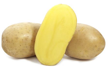 фото сорта картофеля Кея