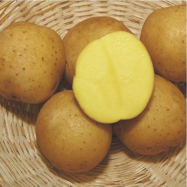 фото сорта картофеля кибиц