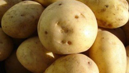 фото картошки космос