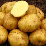 фото красноярской ранней картошки