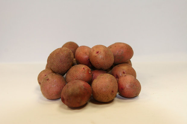 фото сорта картофеля кисловодский