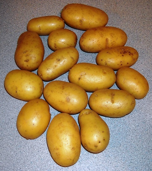 фото сорта картофеля Королле