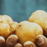 фото картошки Криспсфорол