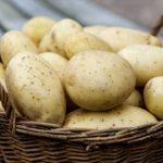 фото картошки кузовок