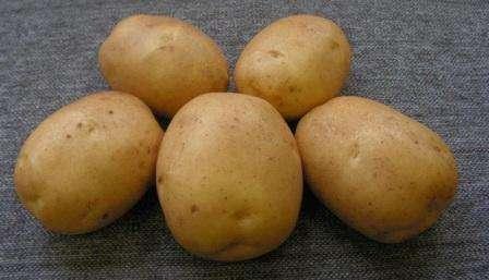 фото сорта картофеля лидер