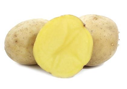 фото сорта картофеля Лиу