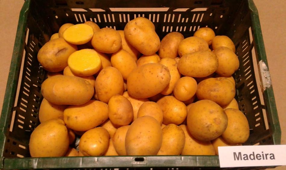 фото сорта картофеля Мадейра