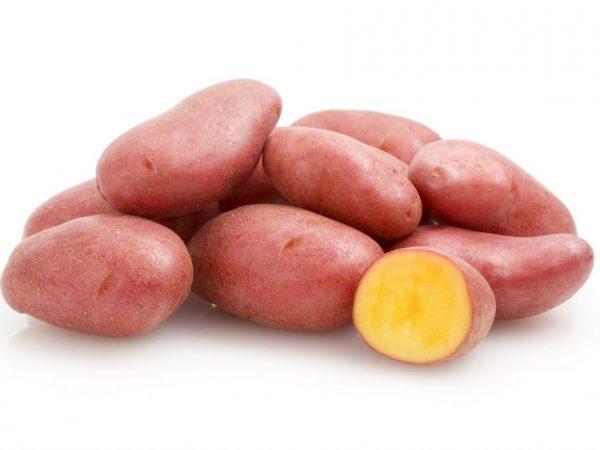 фото сорта картофеля майский цветок