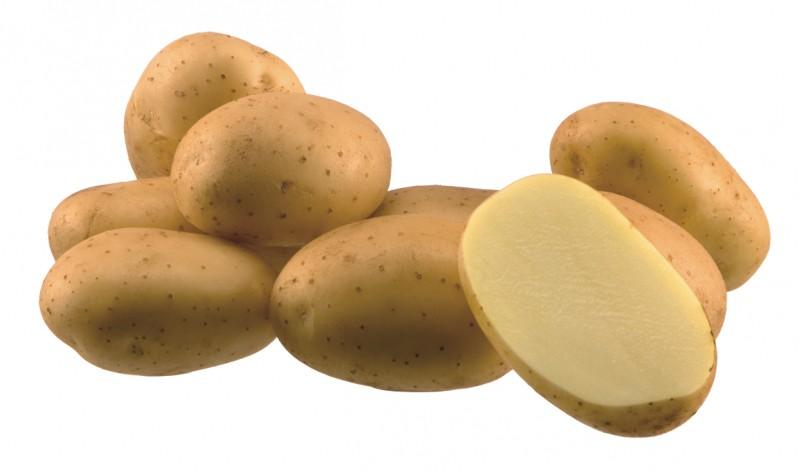 фото сорта картофеля Марс
