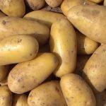 фото картошки маэстро