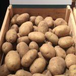 фото картошки Мондео