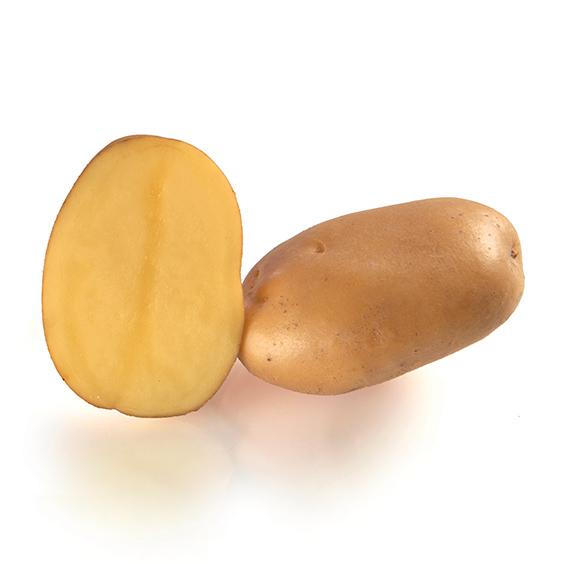 фото сорта картофеля маэстро