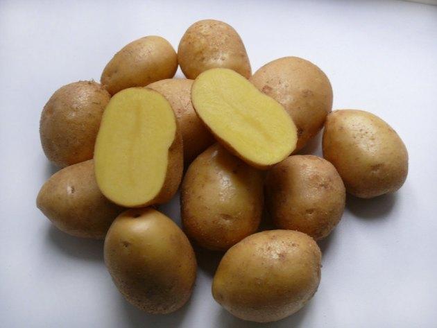 фото сорта картофеля мастер