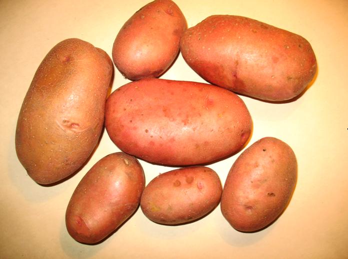 фото сорта картофеля матушка