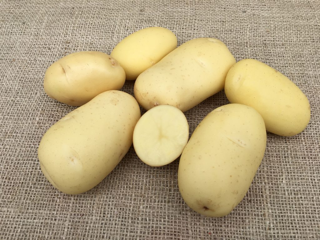 фото сорта картофеля Мондео