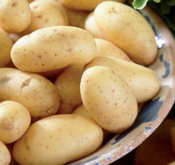 фото сорта картофеля Монт Блан