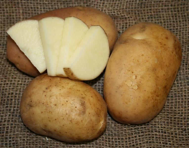 фото сорта картофеля Москворецкий