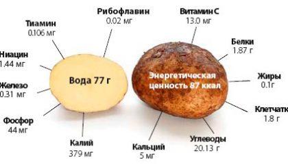 из чего состоит клубень картофеля