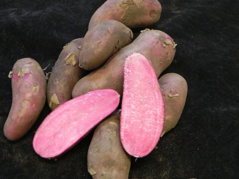 фото картофеля сорт Красная Эмма