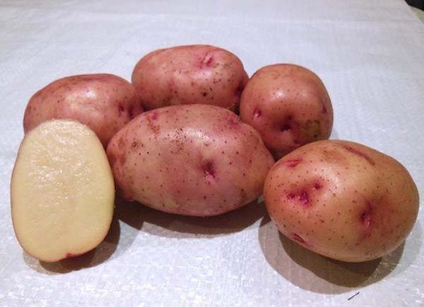 фото картошки Нарт 1