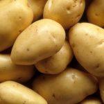 фото картошки Нида