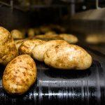 фото картошки Океания
