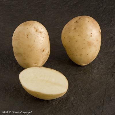 фото сорта картофеля Наван