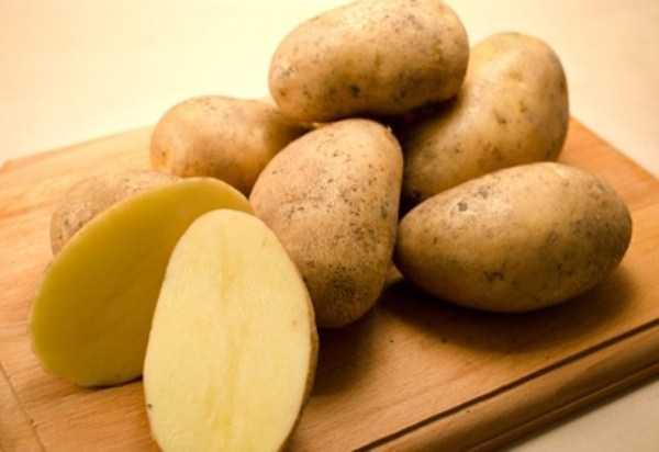 фото сорта картофеля Нептун